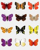 A Collection Of Colored Butterflies