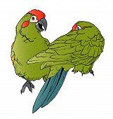Papagaios paquera