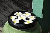Frangipani Water Spa Bowl Float