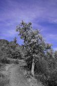 Path Near Tree