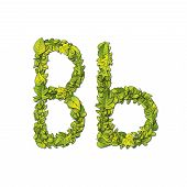 image of storybook  - Leafy storybook font depicting a letter B in upper and lower case - JPG