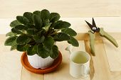 Houseplant, Watering Can And Pruner