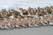 Layers of Shorebirds
