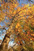 Beautiful Autumnal Landscape