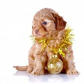Puppy With New Year's Ball And Tinsel.