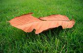 Die Leaf On Green Grass