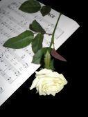 image of condolence  - White rose placed on sheet music on black background - JPG