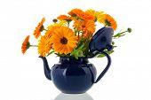 Orange marigolds in blue tea pot