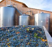 cabernet sauvignon winemaking with grapes and Fermentation stainless steel tanks vessels