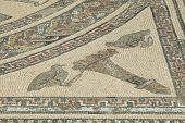 Detail Of Ancient Roman Mosaic At Volubilis
