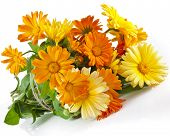 orange flower bouquet heap of calendula close up macro Isolated on white background