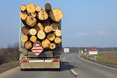 picture of logging truck  - Logging lorry carry wooden logs at road - JPG