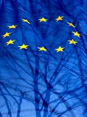 European Union Flag With The Silhouette Of A Shadow Tree And Branches