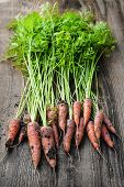 Bunch of orange carrots fresh from garden with dirt on old rustic wood background