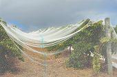 Under Nets