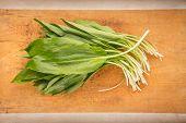 Bundle Of Wild Garlic (allium Ursinum)
