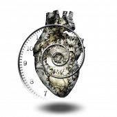 Human heart gears and time spiral