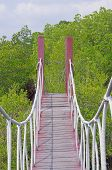 hanging bridge in the mangrove forest