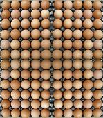 Eggs in egg tray as background