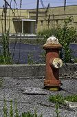 Fire Hydrant And Weeds