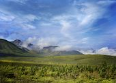 Alaska Landscape In Denali National Park