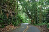 Lush Forest along the Road to Hana, Maui Hawaii