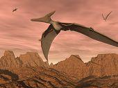 Pteranodon dinosaurs flying