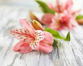 Beautiful Alstroemeria flowers on grey wooden table