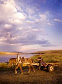 Horse man driving a horse cart in a scenic view of nature.