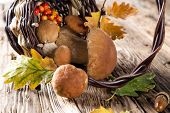Ceps on wooden table, autumn harvest crop
