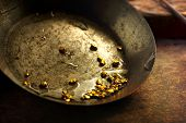 Finding gold. gold panning or digging. Gold on wash pan.