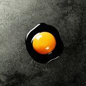 Raw egg on dark background