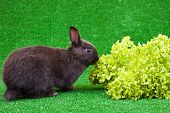 Hungry Domestic Rabbit poster