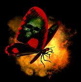 Demon Butterfly