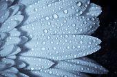 Waterderdrops On Petals