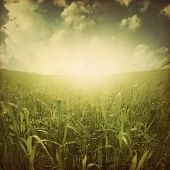 Green grass field at sunset in grunge and retro style.