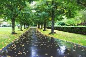 Alley after a rain. Wet asphalt covered with fallen leaves