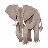 Elephant. Vector illustration, isolated element.