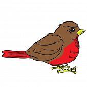 robin bird cartoon illustration