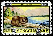 Vintage  Postage Stamp. Mongolian Beaver.