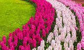 Flower Garden Curves