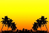 Palms Silhouettes At Sunset, Background With Space For Text.