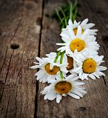 Fresh chamomile flowers on the wooden table