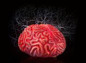 Human Rubber Brain With Electric Shocks
