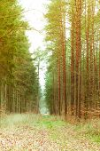 Country Road In The Forest