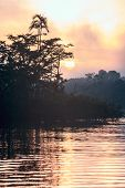 Early Morning In Amazonian Rainforest. Lake Cuyabeno