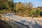 Elephant Walking On The Road.