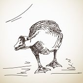 Goose attacks, Vector Sketch, Hand drawn illustration