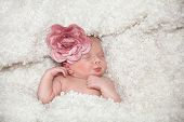 newborn little child baby sleeping flower