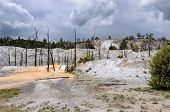 foto of mammoth  - Dead trees stand in the travertine terrace of Mammoth Hot Springs - JPG